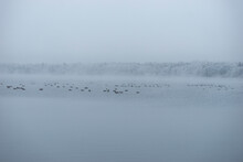 Winter Landscape With Geese In...