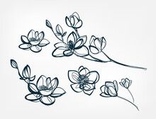 Flower Magnolia Line One Art Isolated Vector Illustration