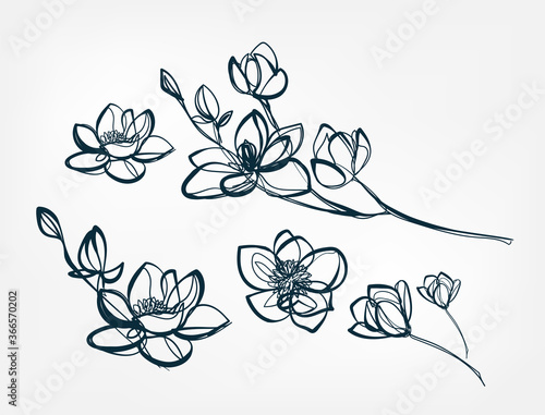 Photo flower magnolia line one art isolated vector illustration
