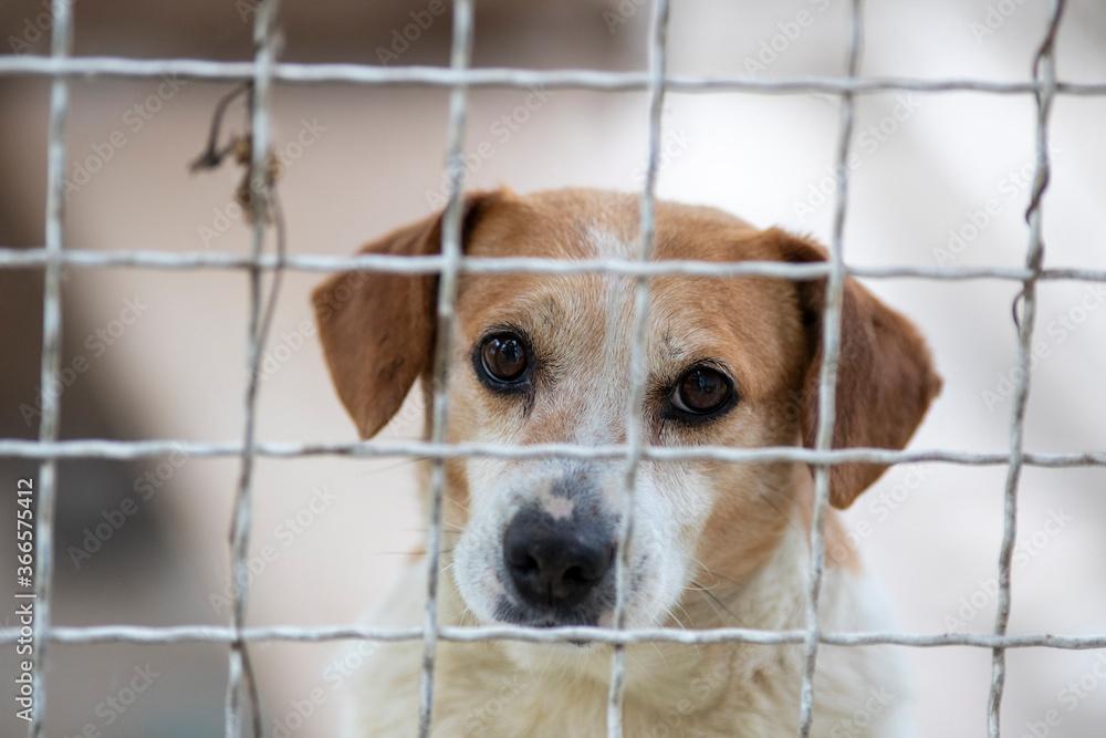 Dog behind bars in shelter