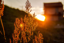 Amazing Sunrise At Summer Mead...