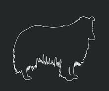 Portrait Of Rough Collie Vector Line Contour Illustration Isolated On Black Background. Scottish Shepherd Dog. Beware Of Dog.