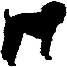 Schnoodle Silhouette Vector