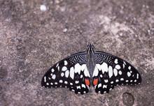 Beautiful Butterflies On The ...