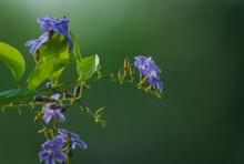 Spring Flowers Green Color Hig...