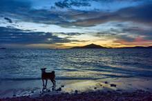 Dog Watching The Sunset