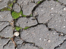 Textural Abstraction Of Stones, Moss, And Asphalt. Moss Grew On The Asphalt. Abstraction From Moss.