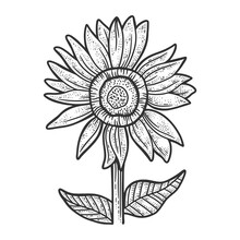 Sunflower Sketch Raster Illustration