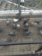 Pigeons On The Pier