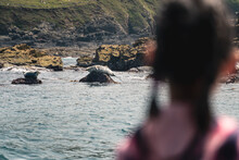 Watching Seals In The Atlantic...
