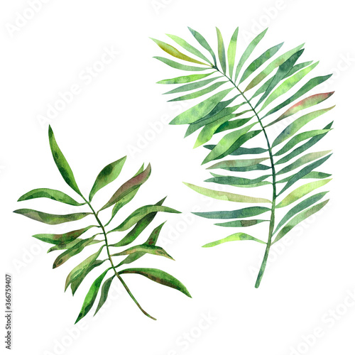 Fototapety, obrazy: Hand-drawn watercolor tropical leaves of different palm trees in high quality. Concept for drawing up designs, cards, stickers, invitations