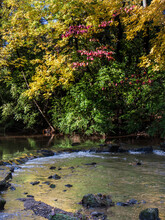 Portrait Photo Of A Rocky Stream During Autumn In Wyomissing Park