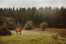 Chestnut Horse Grazing In Green Pasture Near Forest In Afternoon Under White Sky In Countryside