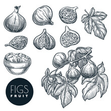 Ripe Figs On Branch, In Dried ...