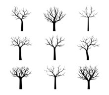 Set Naked Trees. Vector Outlin...