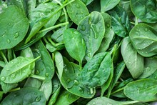 Baby Spinach - Versatile And N...