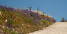 Blue Lavender , Orange Flowers, Dry Grasses Separated, Clear Blue Sky And Dirt Road