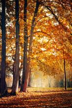 Beautiful Nature Autumn Landscape On Sunny Day