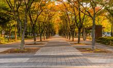 Wooden Gazebo In Urban Park