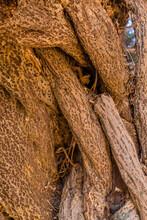 Closeup Of Gnarled Tree Trunk