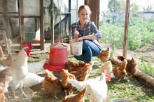 Smiling Girl Farmer Feeding Chicken From Bucket With Seed At Farm