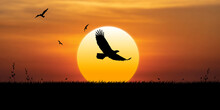 Eagle Flies At Sunset, Birds F...