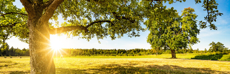 Landscape banner wide panoramic panorama background - Hay bales on a field and blue sky with bright sun and apple tree in the summer in Germany