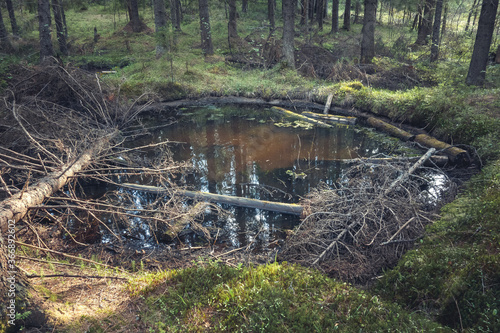 Foto A huge crater from the explosion in the forest, flooded with water and fallen trees