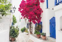 Traditional Greek Street With Bougainvillea Flowers In Paros Island, Cyclades, Greece