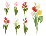 Fototapeta Tulipany - Colorful tulip bouquet, pink, yellow, white, red colors. Spring floral isolated elements on white background. Blossom vector flowers. Digital watercolor illustration. Vintage graphic design elements.