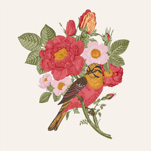 Bird And Roses, Decorative Element, Vintage Vector Illustration