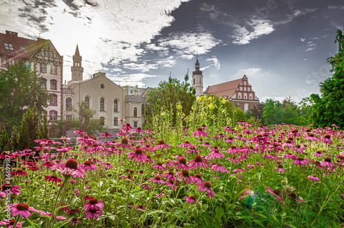 Fotografía miasto Opole całe w kwiatach