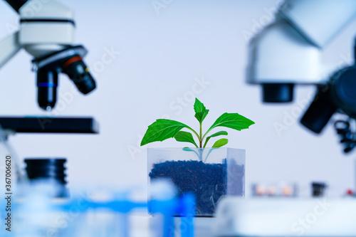 Fototapeta Genetically modified plant tested  .Ecology laboratory exploring new methods of plant breeding obraz