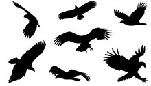 Set Of Eagle Silhouette, Shadow Flat Design Vector Illustration