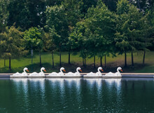 Swan Paddle Boats For Rent At ...