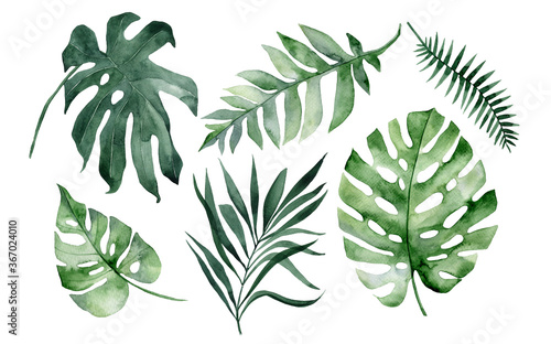 set of watercolor tropical leaves on white background Fototapet