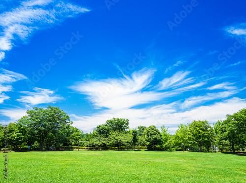 青空が広がる住宅街の公園 Fototapeta