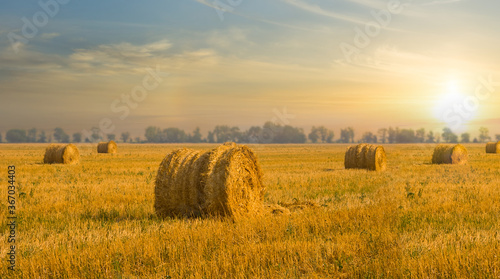 Obraz na plátne summer wheat field after a harvest at the sunset, agriculture industrial scene