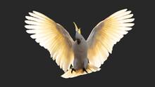 Cockatoo Parrot Bird Portrait ...