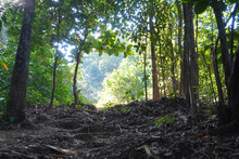 Low Angle View Of Forest With The Sunny Exiting Point Inside The Rainforest Malaysia.
