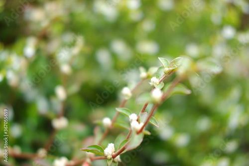 Fotografie, Obraz bunga