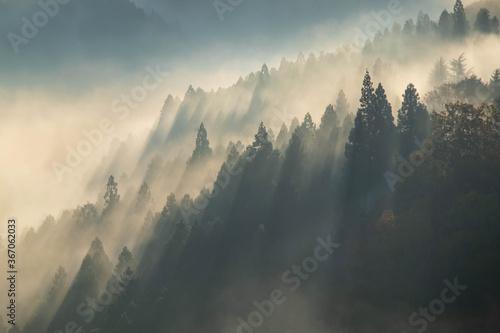 Obraz 山岳地帯の朝靄と光芒 - fototapety do salonu