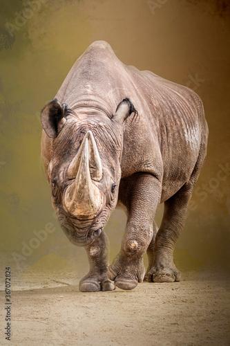 Fotografie, Tablou a rhino walking through the sand