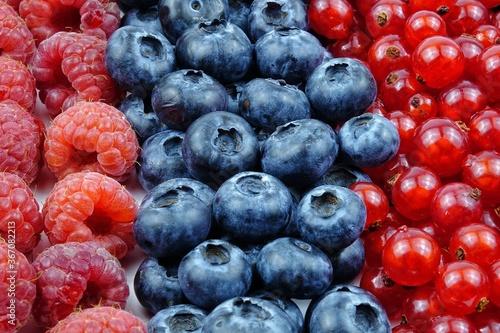 Fresh summer healthy berries Canvas Print