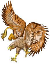 Flying Griffin, Griffon, Or Gr...