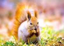 Cute Squirrel, Cute Animal Pho...