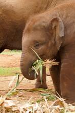 Elephants - Chaing Mai