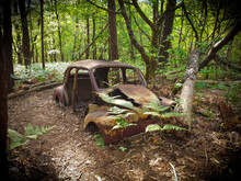 Car & Forest