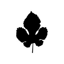 Doodle Leaf Icon Isolated On White. Stencil Leaf Of Mulberry. Vector Stock Illustration. EPS 10