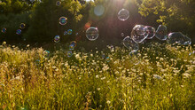 Bright Shiny Soap Bubbles On The Background Of A Flower Meadow And Sunlight.